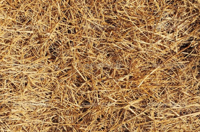 Полы в птичнике накрывают подстилками из сена