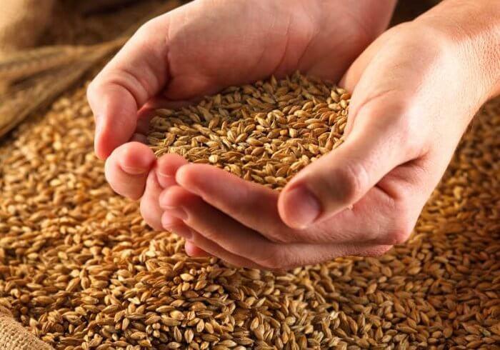 Основой рациона является зерно