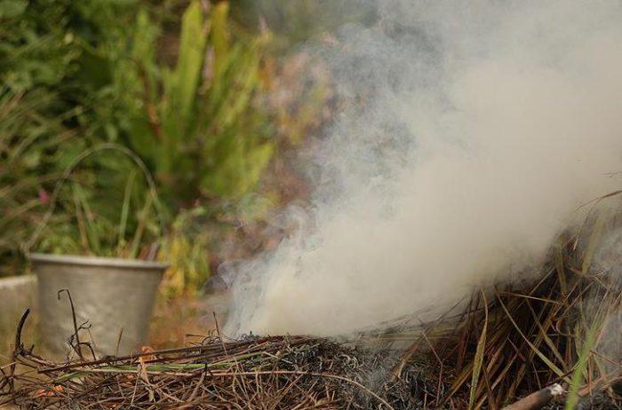 Дымление капусты