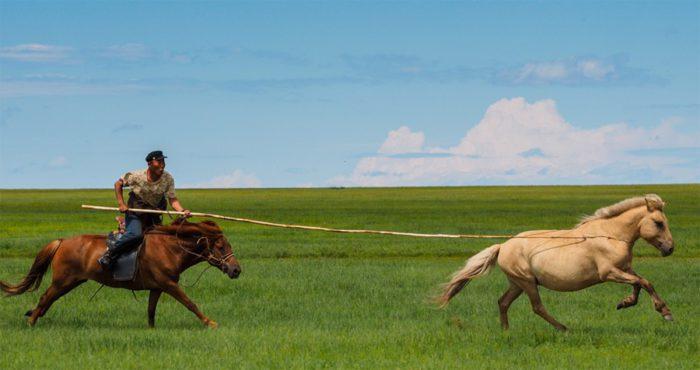 Применение бурятских лошадей