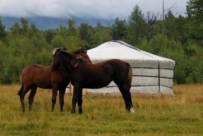 Бурятские лошади