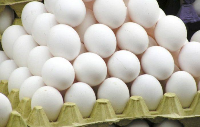 Яйценоскость несушек