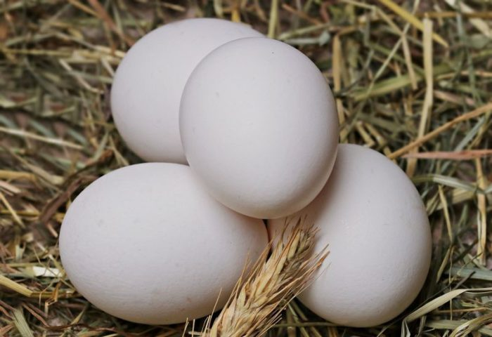 Крупный размер яиц