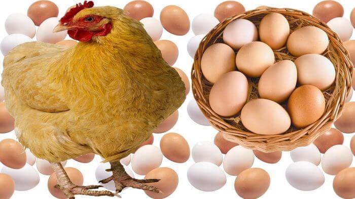 Яйценосткость кур