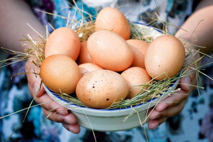 Московская курица несёт коричневые яйца