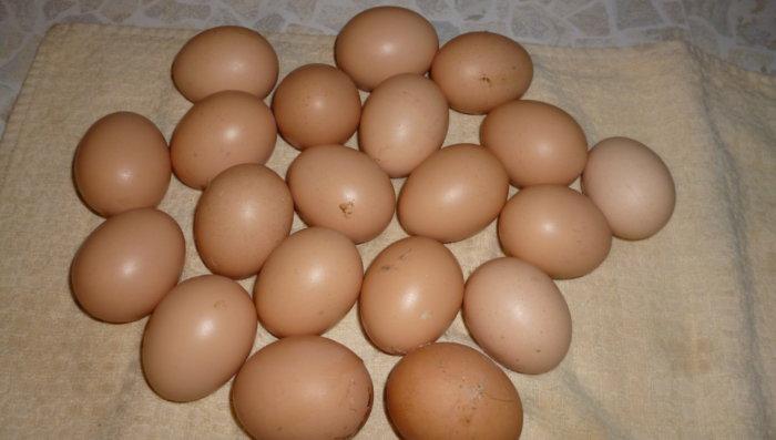 Яйца ливенской ситцевой несушки