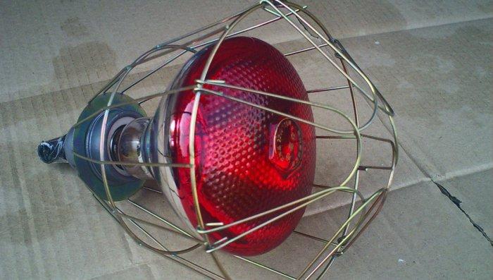 Инфракрасная лампа для обогрева бройлерных цыплят
