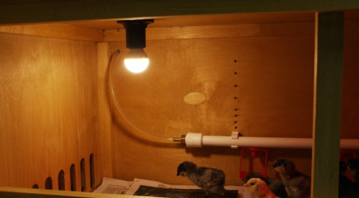 Продолжительность светового дня для несушек – 13 часов