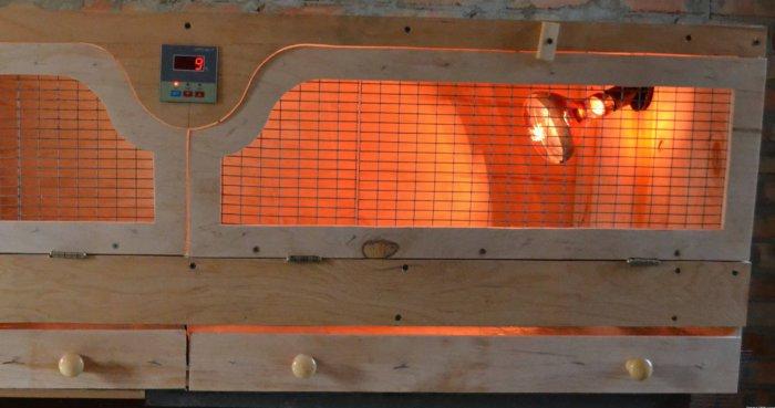Цыплят выращивают в брудерах под лампой