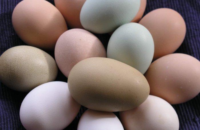 Куры льюянг несут цветные яйца