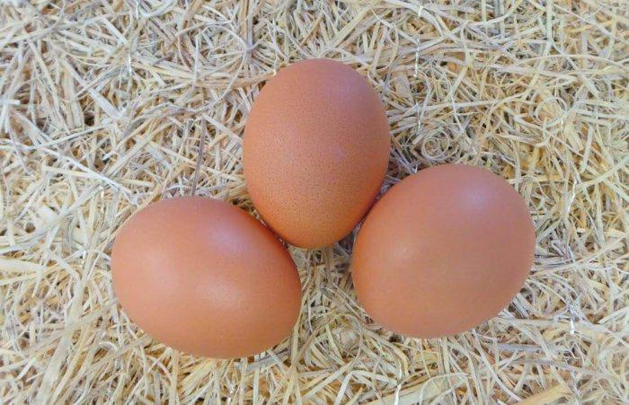 Яйца курочек иза браун