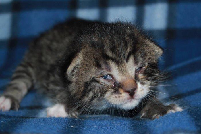 У котёнка конъюнктивит