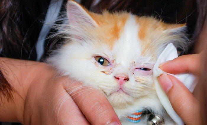 Промывание глаз котёнку