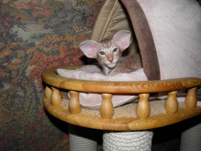 Котёнок в домике