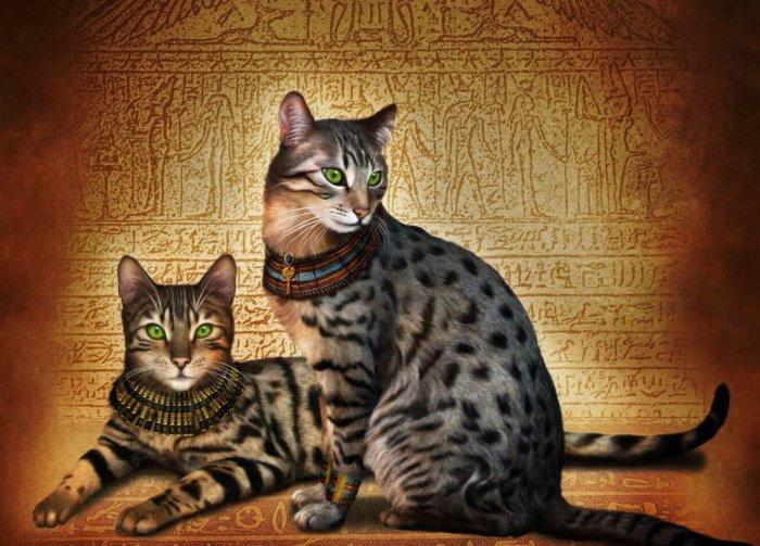 Кот и кошка египетская мау