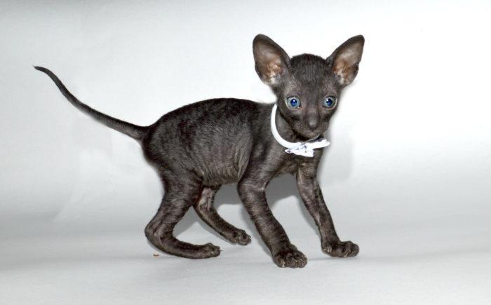 Здоровый котёнок игрив и активен