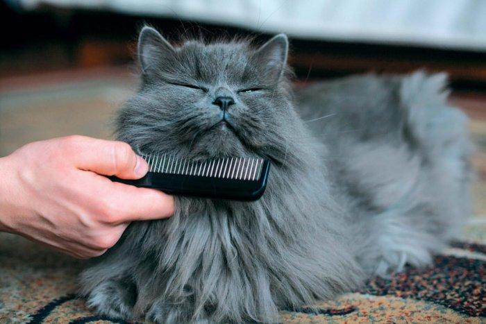Вычёсывание шерсти помогает предотвратить её попадание в желудок кошки