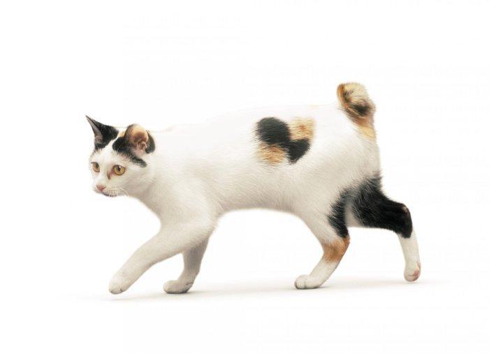 У каждой кошки уникальная форма и длина хвоста