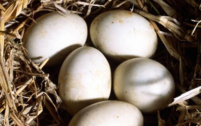 Вес утиных яиц