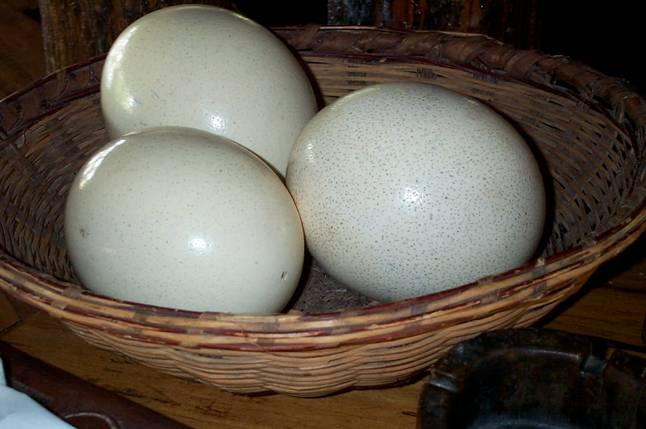 Вес страусиных яиц