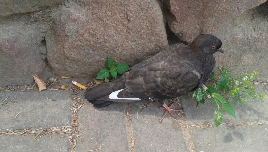 Этим нельзя кормить голубей