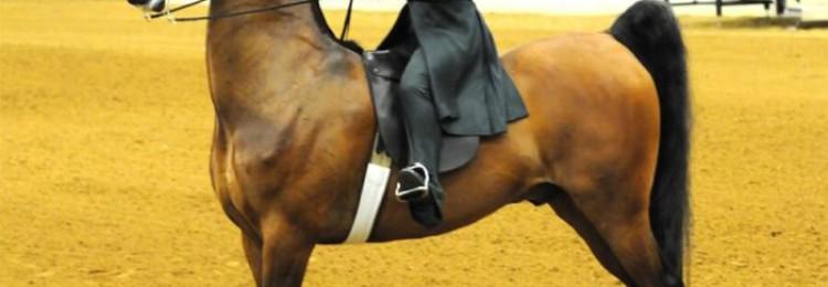 Американская верховая лошадь