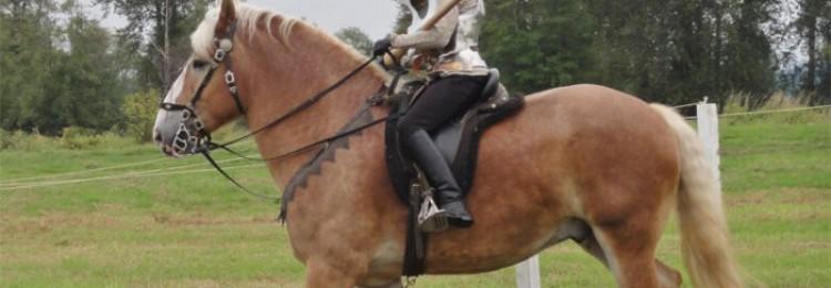 Дестриэ порода лошадей