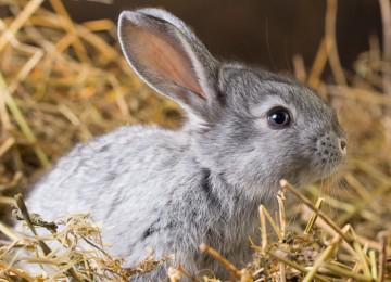 Почему кролик ничего не ест и не пьёт?