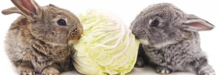 Капуста кроликам: какие виды можно давать, а какие — нет?