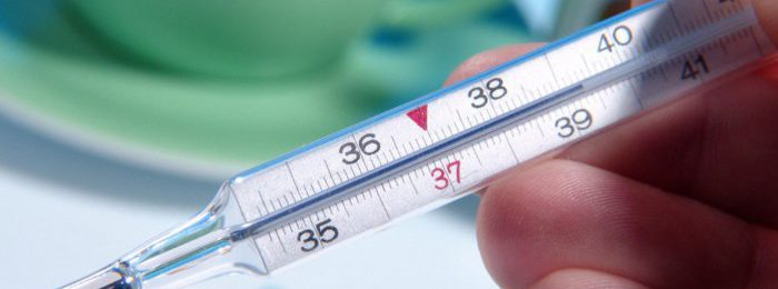 Нормальная температура у теленка