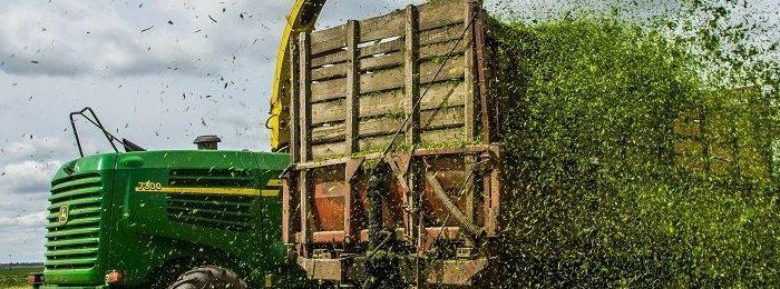 Кукурузный силос