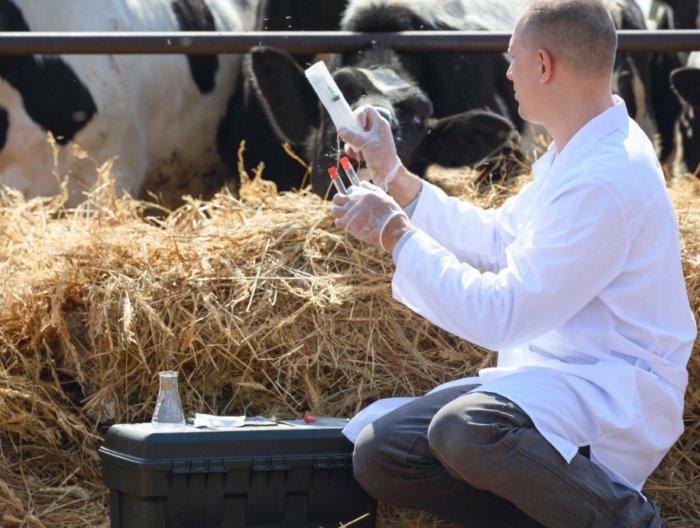 Осмотр коров ветеринаром