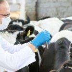 Внутримышечное или внутривенное введение антибиотиков