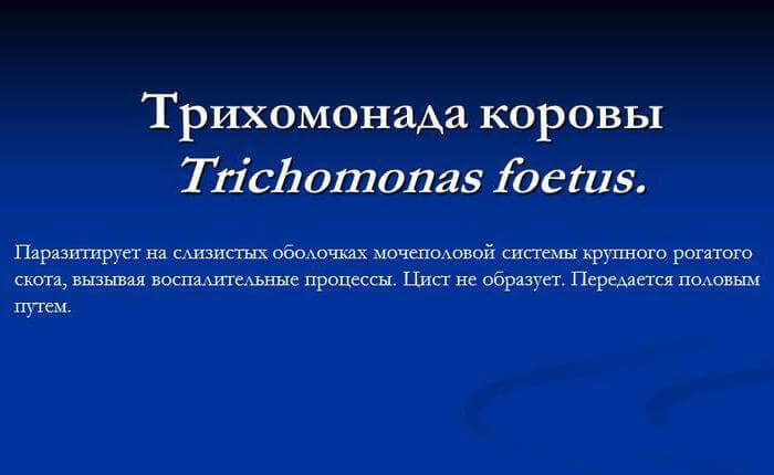Чем является трихомонада