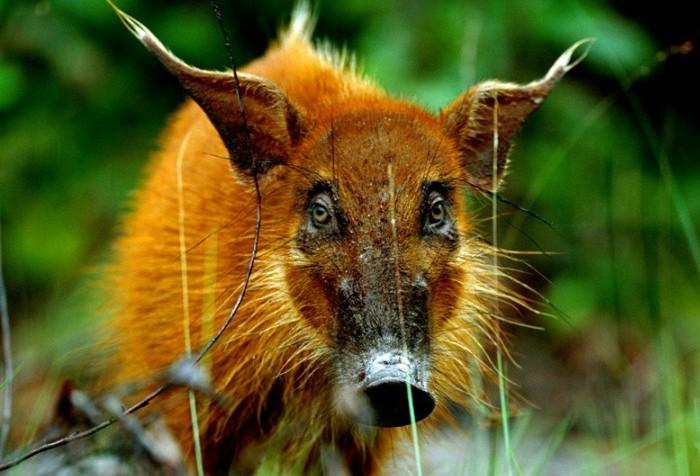Мадагаскарский вид