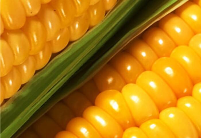 Кукуруза для свиней