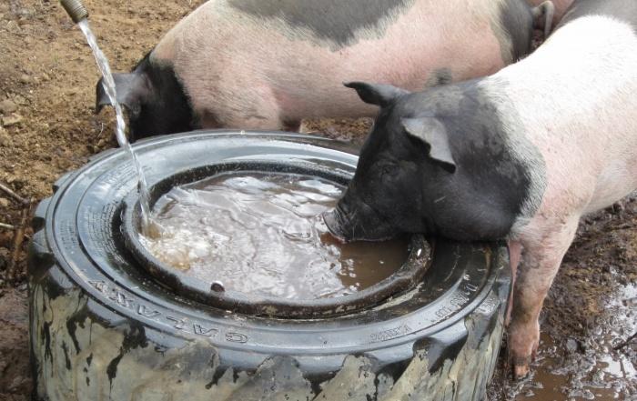 Питьё загрязнённой воды