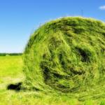 Заготовка дикой травы на сено