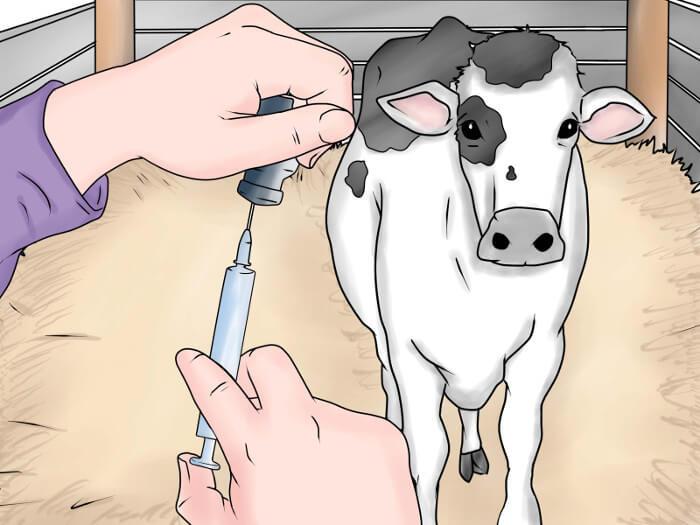 Противопаразитарные инъекции