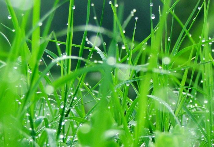 Свежая трава