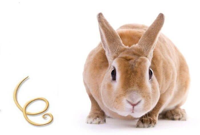 Гельминты у кролика