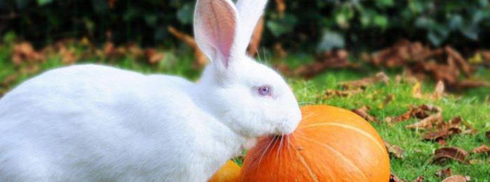 Кролик и тыква