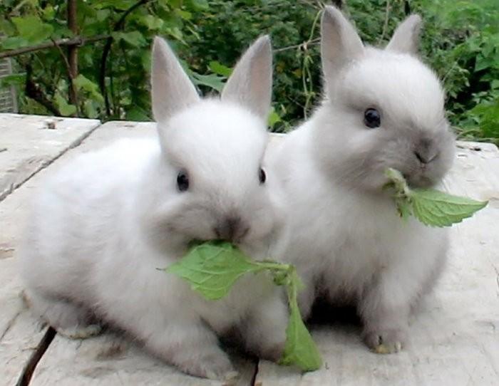 Кролики едят крапиву