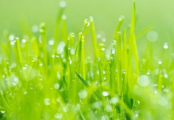 Трава с каплями росы