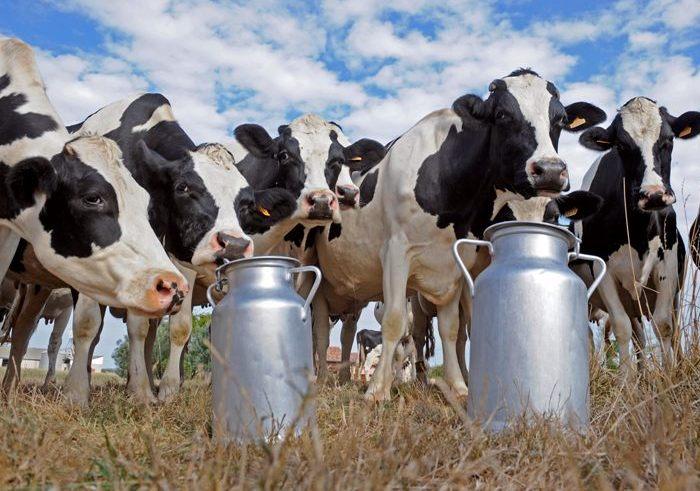 Удои молока