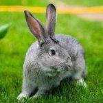 Свежая зеленая трава необходима кроликам