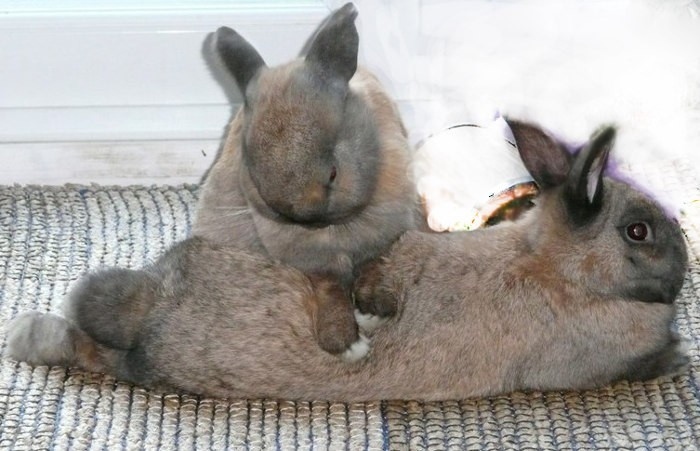 Массаж кролика