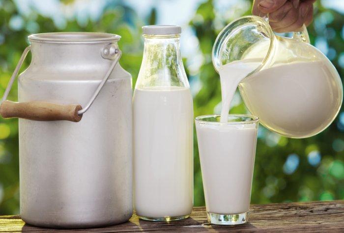 Карликовые коровы способны давать до 3 л молока за сутки