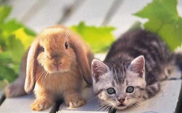 Кролику подходит дозировка для котенка