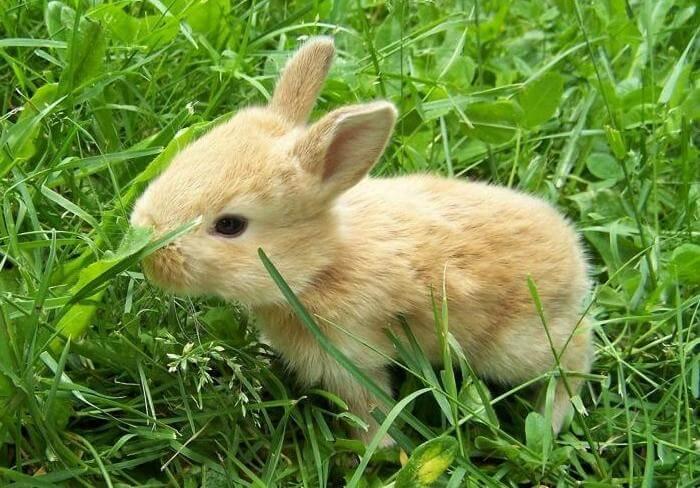 Кролики хорошо поедают лесные и луговые растения